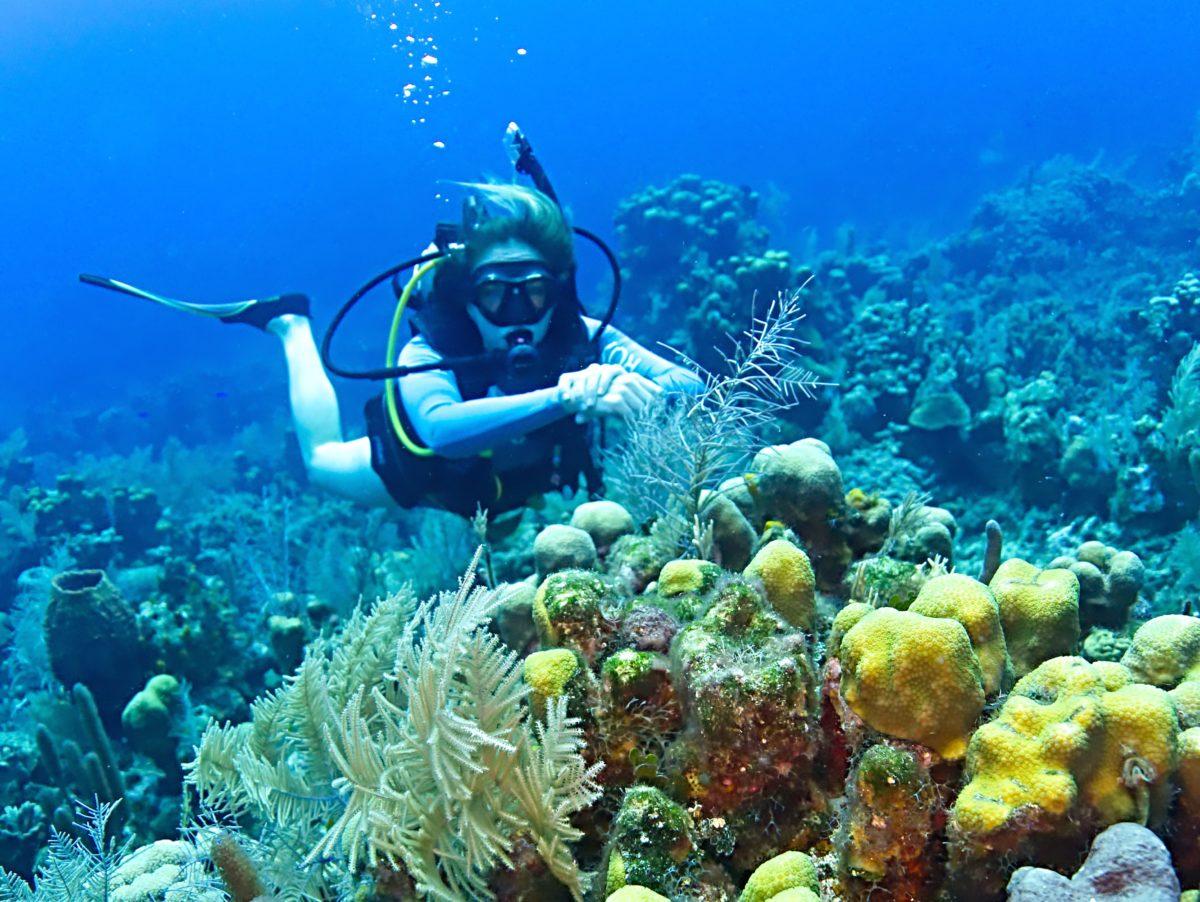 Emma's Dilemmas: A dive with a friendly Nassau Grouper